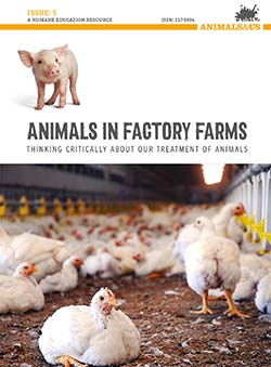 Animals in Factory Farms: Thinking Critically about our Treatment of Animals